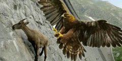 اقوى طير جارح