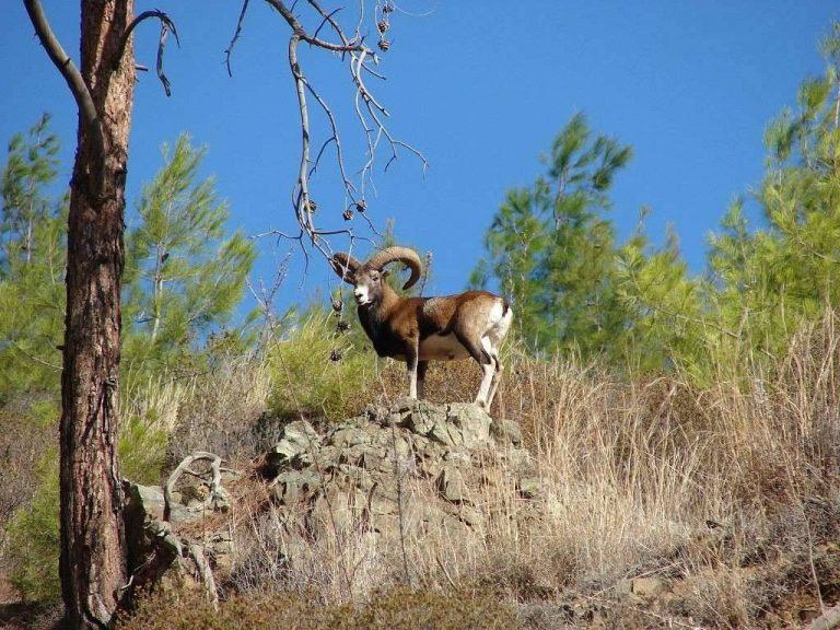 بماذا تشتهر اليونان في الحيوانات  تعرف على أشهر الحيوانات الموجودة في اليونان