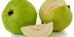 أفضل أنواع الجوافة
