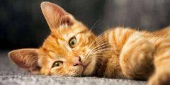 لماذا بيع القطط حرام احاديث واقويل حول تحريم بيع القطط