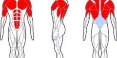 ما هي اكبر عضله في جسم الانسان