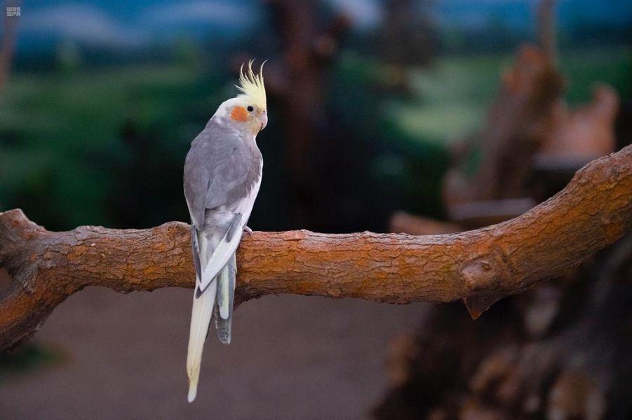 معلومات عن حديقة الطيور بيرد بارك بالهدا