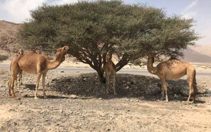 معلومات عن وادي البيح