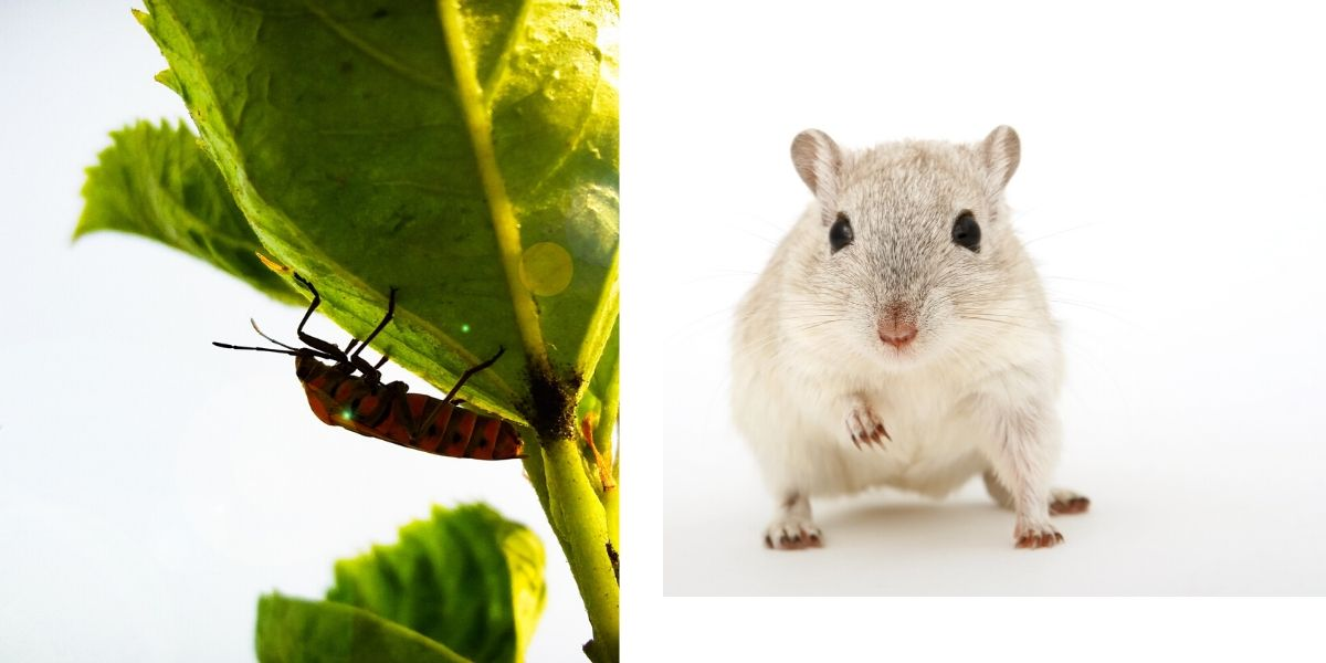 طرق مكافحة الحشرات و القوارض المنزلية و الزراعية
