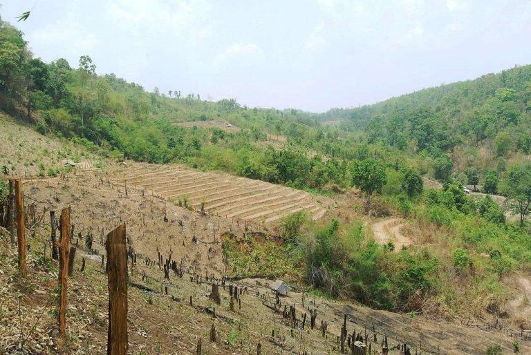 بماذا تشتهر تايلند في الزراعة