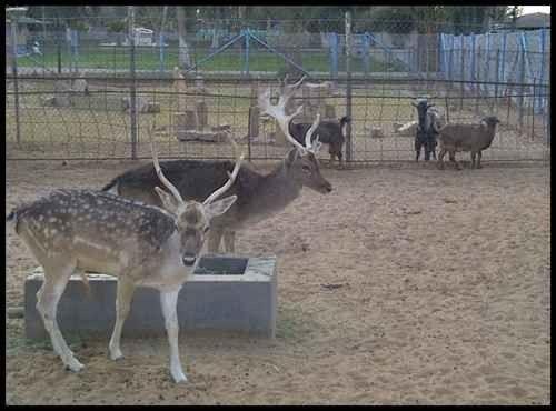 حديقة الحمراء للحيوانات في المدينة المنورة Al Hamraa Park For Animals