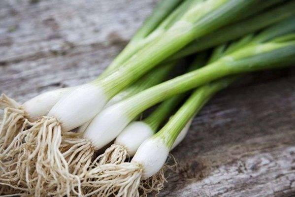 تعرف على طريقة حفظ البصل الأخضر