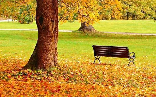 مميزات فصل الخريف  أشياء مميزة تجعل فصل الخريف من أفضل فصول العام