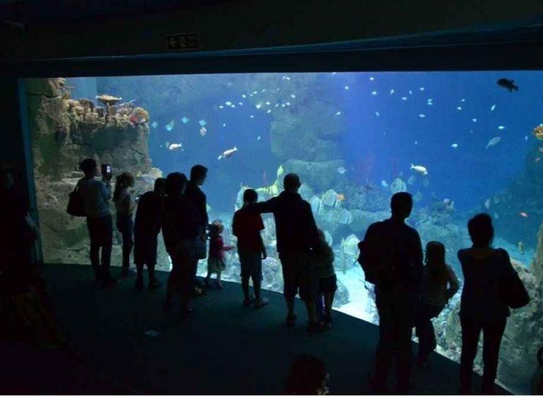 """""""حوض السمك الوطنى""""..واحدا من أجمل الاماكن السياحية في بليموث البريطانية ..."""