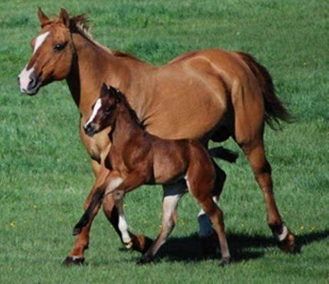 معلومات للأطفال عن الحصان