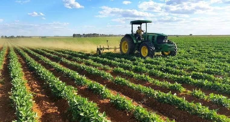 بماذا تشتهر جنوب أفريقيا في الزراعة