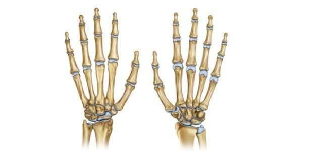 كم عدد عظام اليد  وأهم المعلومات التي لا تعرفها عن عظام اليدين