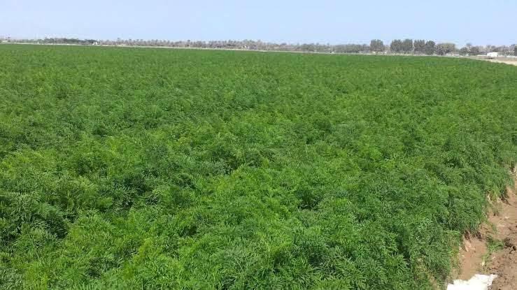 بماذا تشتهر سلطنة عمان في الزراعة