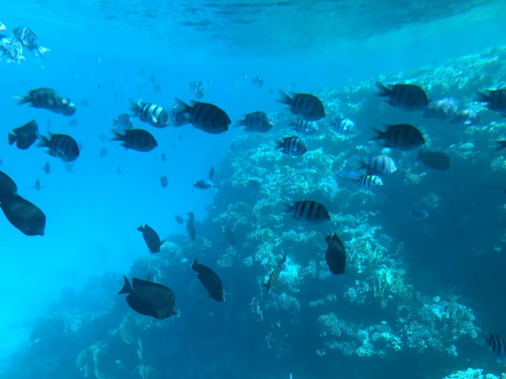 كنوز البحر الأحمر
