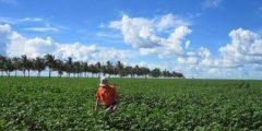 بماذا تشتهر البرازيل في الزراعة تعرف على أفضل المحاصيل التي تنتجها البرازيل
