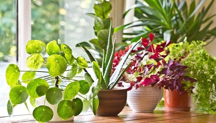 أفكار للنباتات