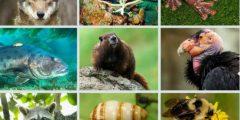 الحيوانات الفقرية واللافقرية