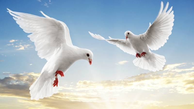 موضوع تعبير عن الحب والسلام بالعناصر الرئيسية