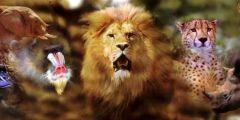 اقوى الحيوانات في العالم بالترتيب معلومات عن أقوى ثمانية حيوانات في العالم