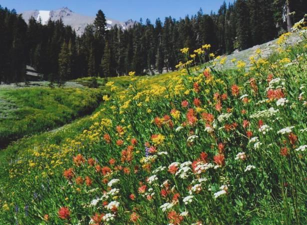 بحث عن النباتات الطبيعية بالعناصر الرئيسية