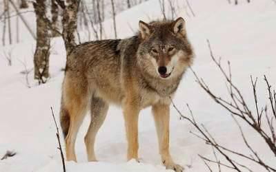 بماذا تشتهر بولندا في الحيوانات ست حيوانات يمكنك رؤيتها في بولندا