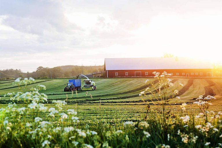 بماذا تشتهر السويد في الزراعة أهم المحاصيل الزراعية التي تنتجها السويد