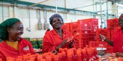 العمل في كينيا