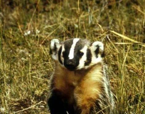 بماذا تشتهر البرتغال في الحيوانات أشهر أربع حيوانات في البرتغال