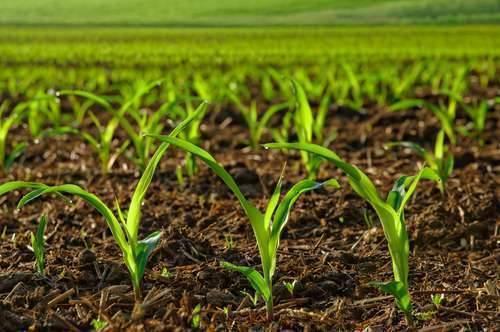 بماذا تشتهر هولندا في الزراعة اهم المحاصيل الزراعية لهولندا