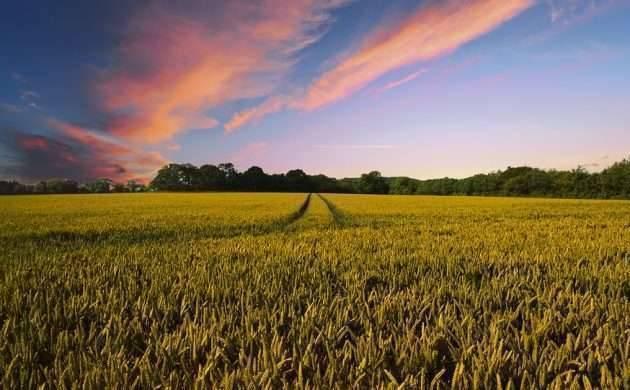 بماذا تشتهر الدنمارك في الزراعة