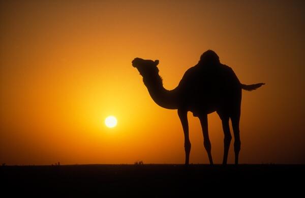 خواطر عن البدو
