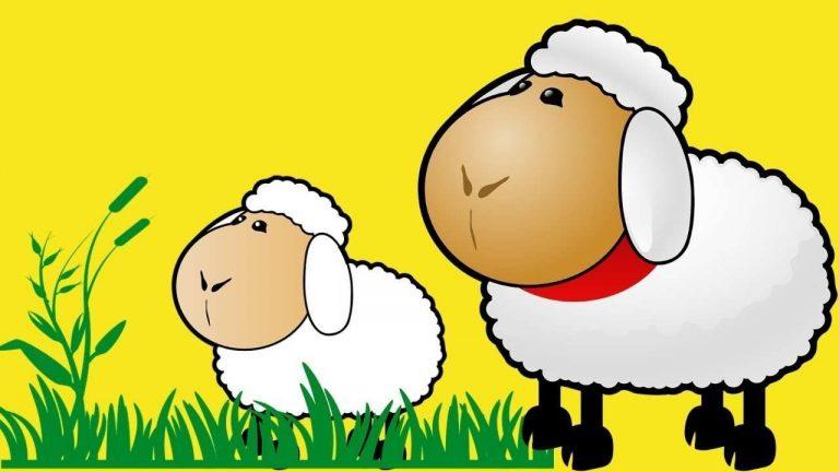 قصص عن خروف العيد