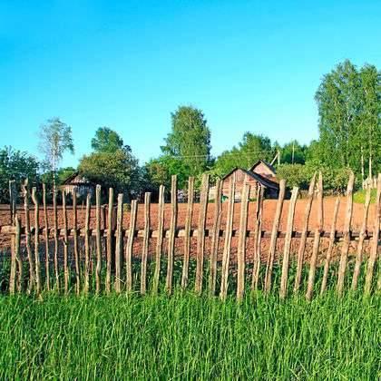 بماذا تشتهر روسيا في الزراعة تعرف على الانتاج الزراعي لروسيا