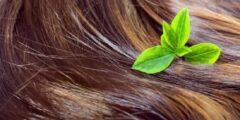 اقوى خلطات لتكثيف الشعر الخلطات الطبيعية لتطويل وتكثيف الشعر